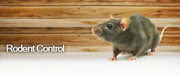 Image result for rodent control