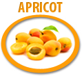 apricot pureeconcentrate usa