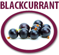blackcurrant juice concentrate usa