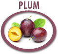 plum juice concentrate usa
