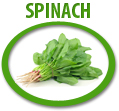 spinach juice concentrate usa