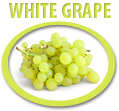 white grape juice concentrate usa