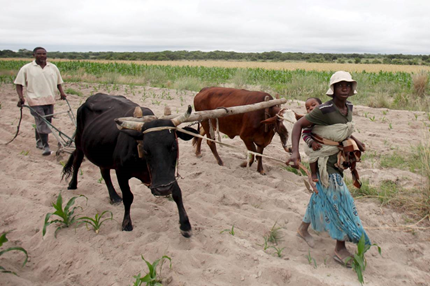 Zimbabwe drought, hunger push farmers to seek greener pastures