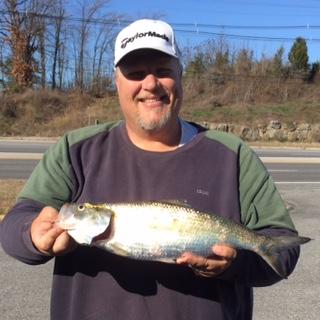 Monster Skipjack Herring caught below Barkley Dam