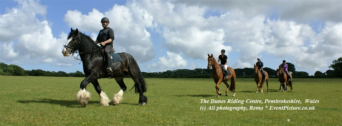 Police in Wales, Welsh horses, Horses, Wales, Tourism, Tourism in Wales, Horse photography
